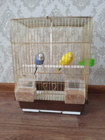 Продам 2 попугая вместе с клеткой