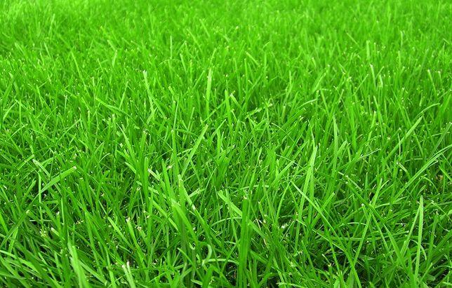 Газон - семена маг Тайбурыл