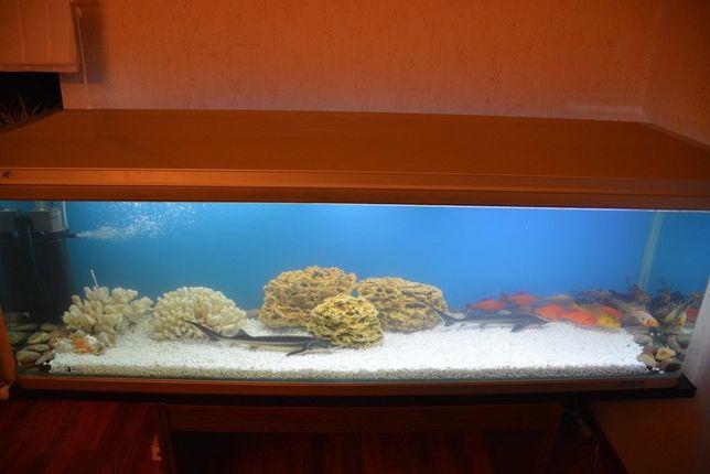Продам аквариум JEBO 500 литров