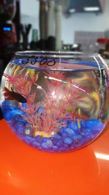 Аквариум круглый с рыбкой петушком