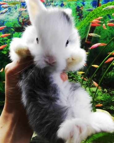 Крольчонок Декорашка