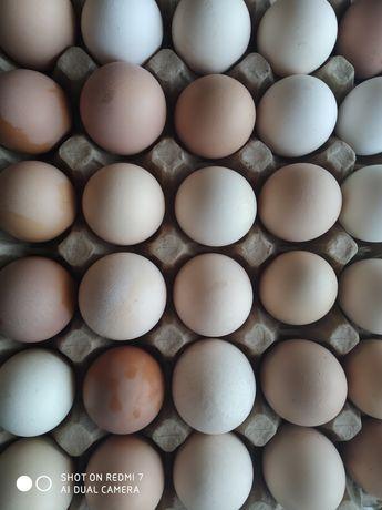 Яйца домашние, свежие