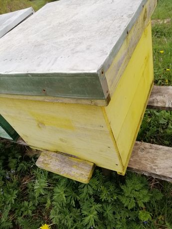 Stupi lăzi albine