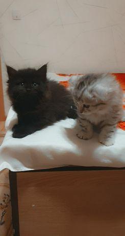 Кошки мальчики девочки