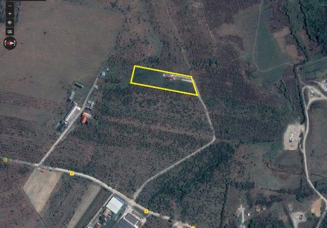 Teren langa DN1 10.000 mp pentru depozit, hala, ferma de animale, etc
