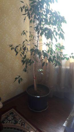 Продам комнатные горшечные растения