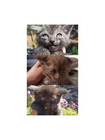 Милые котейки ищут дом.