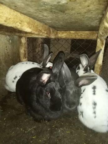 Кролики, 6месяцев