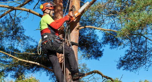 Tăiere copaci 24/7 alpinist utilitar bucurești si zonele limitrofe