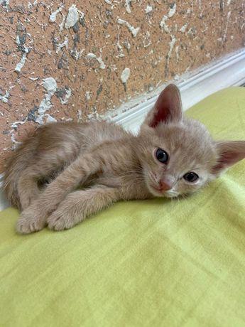 Милые котята домашние