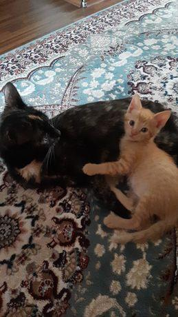 Отдам кошку с котёнком в хорошие руки