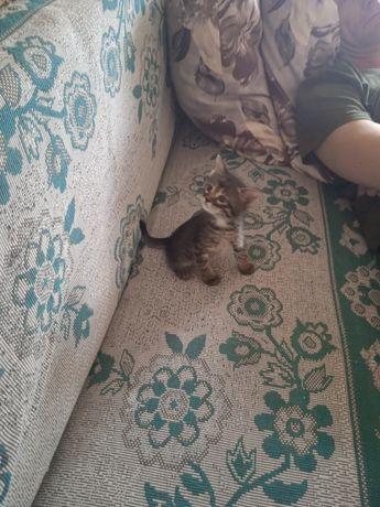 Отдадим котят только в добрые руки!