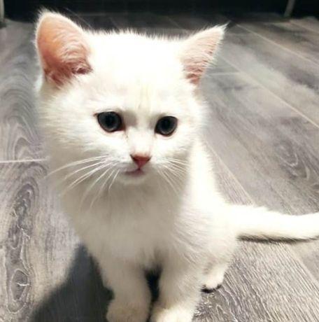 Милый котик в добрые руки