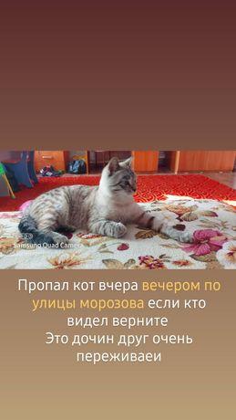 Пропал кот тимошка