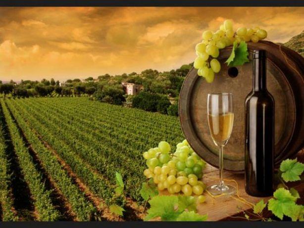 Pepiniera pomicola si viticola