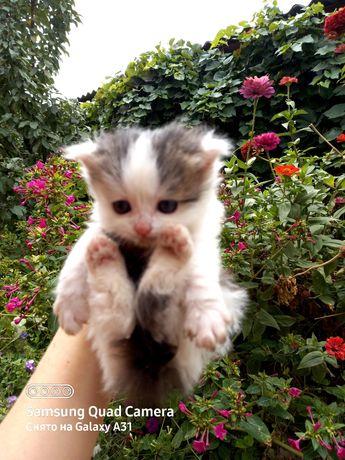 Отдам котят,в добрые руки.