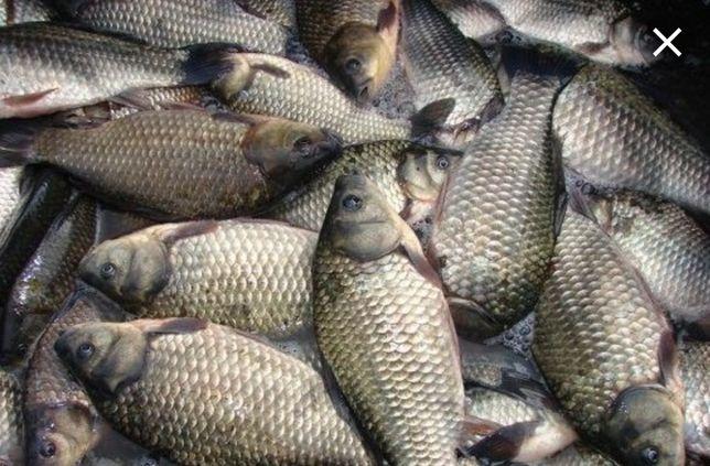 Реализуем рыбу, собственные водоёмы