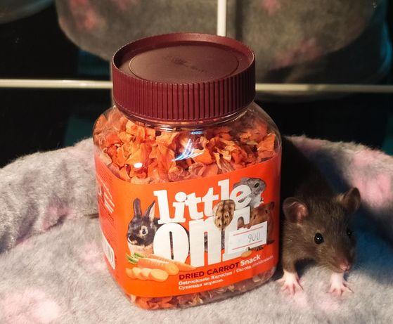 Милые крысята, крыски, крысы