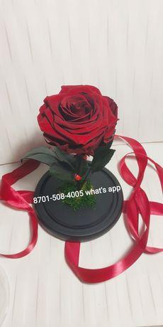 Роза в колбе. Подарок девушке, жене, маме, сестре, подруге.