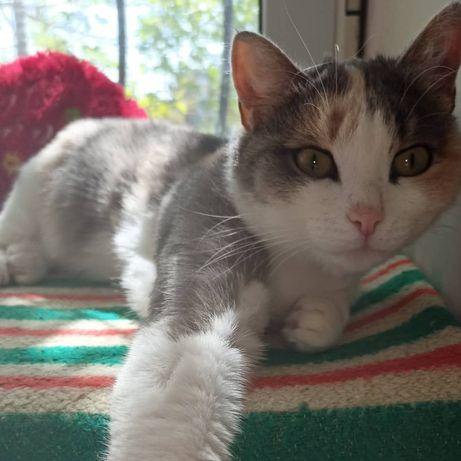 Кошка Матрёшка 2 года