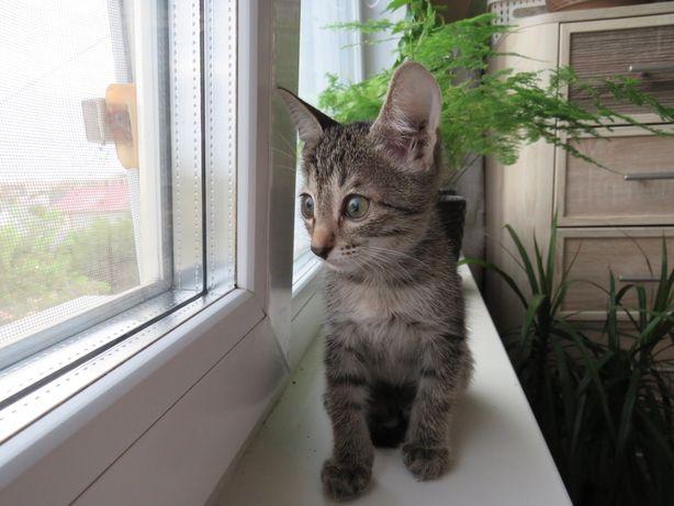 Котенок девочка 3мес