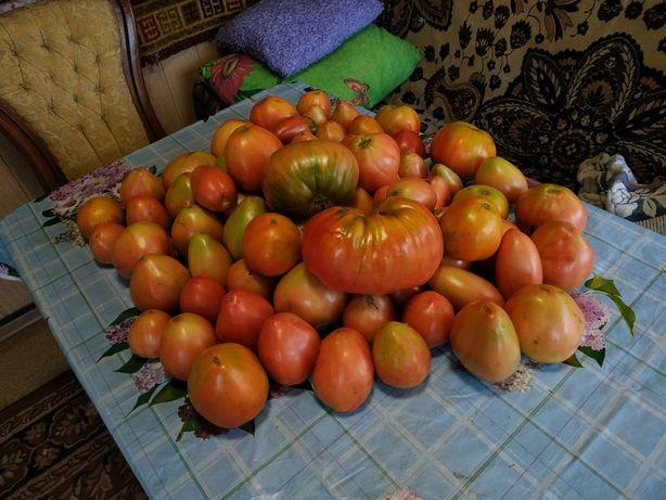 Продам домашние помидоры,огурцы,чеснок