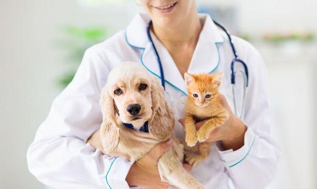Ветеринарный врач. Ветеринар г. Капчагай