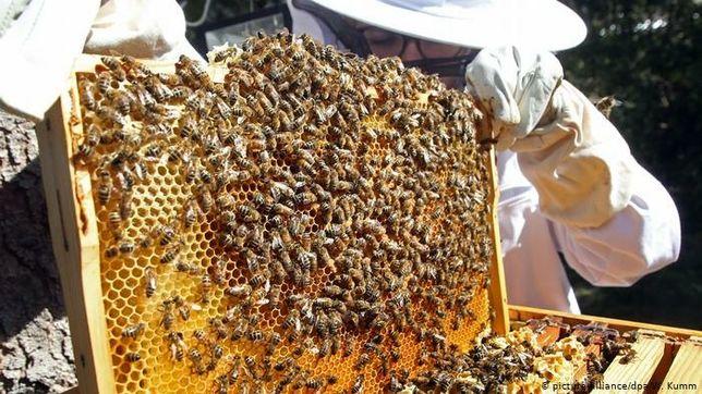 Мёд  свежий с пасики