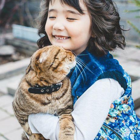 Домашняя передержка для кошек и маленьких собачек!