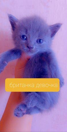 Срочно продам котят последние фото это мать