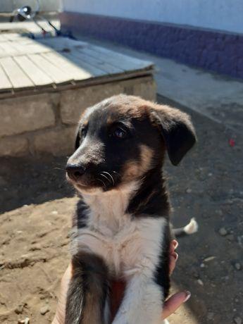 Бесплатно отдам щенка в добрые руки