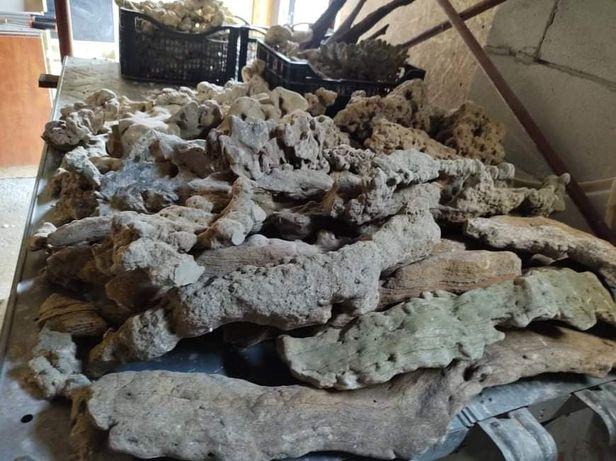 Pietre calcaroase naturale pentru ciclide africane