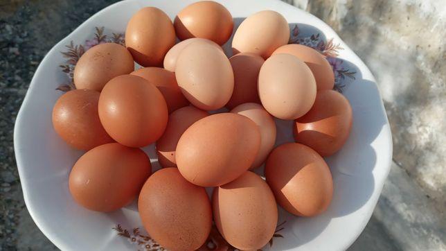 Продам домашние куринные яйца.