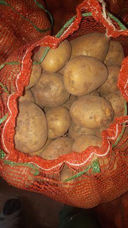 Продам картофель сорт,,латона,,.