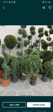Plante de cea mai bună calitate si avem mai multe specii