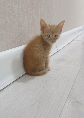 Голубоглазый Котёнок
