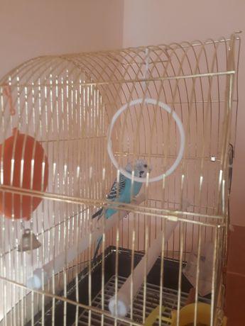 Продам волнистый попугай с клеткой.