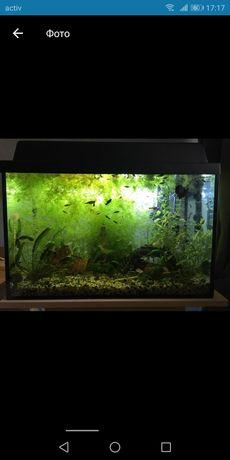 Продаю аквариум 14500 тыс готовый с рыбками и растениями и кислород.))