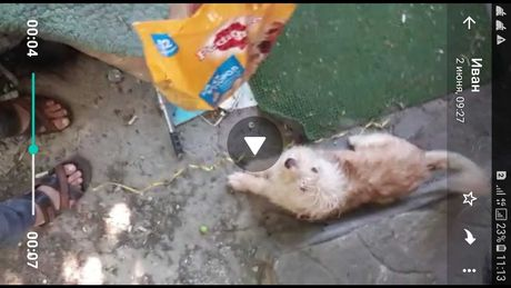 Пропала собака Богенбай батыра Аманжолова