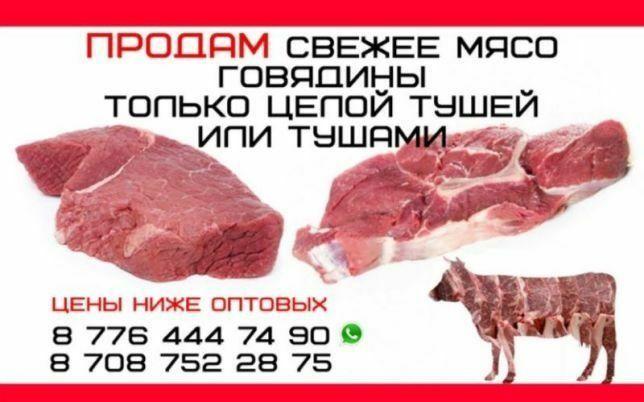Куздик согым говядина