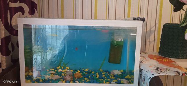 Аквариум с рыбками и улитками