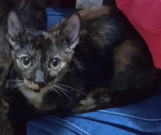 Кошечка-подросток,мышеловка,здорова,стерелизована в добрые руки