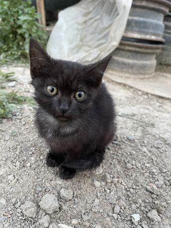 Отдам котят 3 месяца