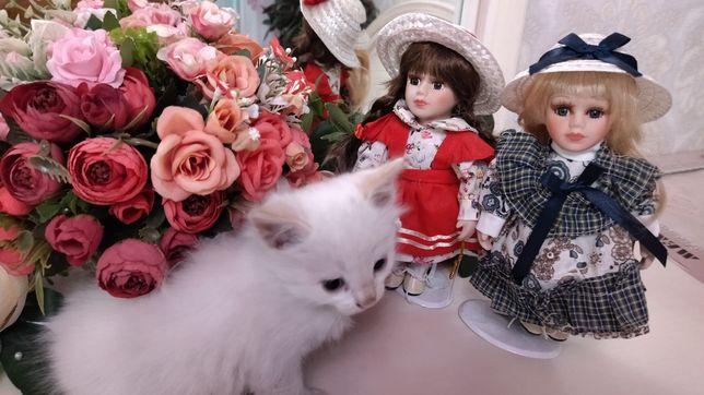 Белые, голубоглазые котята