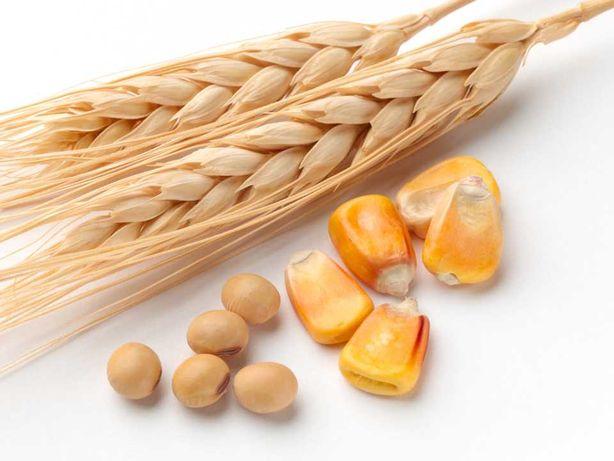 seminte gazon cereale porumb lucerna rapita ingrasaminte pesticide etc