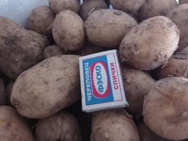 Продам картофель на еду