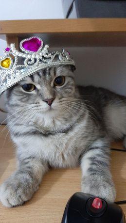 Бесплатно Вязка кота