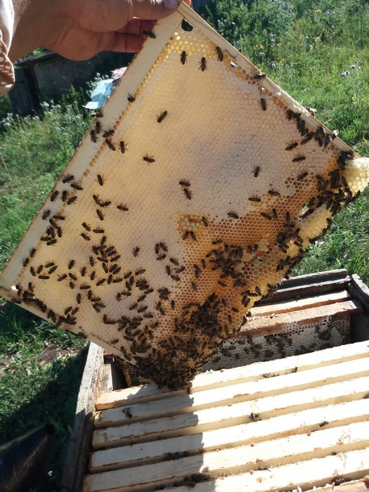 Сотовый мёд горный урожай 2020 г Усть-Каменогорск - изображение 1