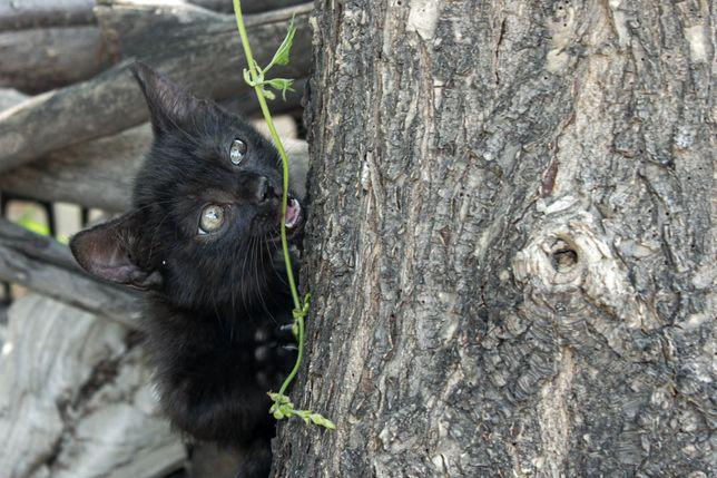 Кошка охотница в 7 поколении