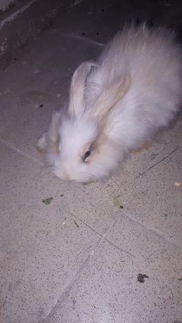 Декоративный кролик самец 4-5 месяцев